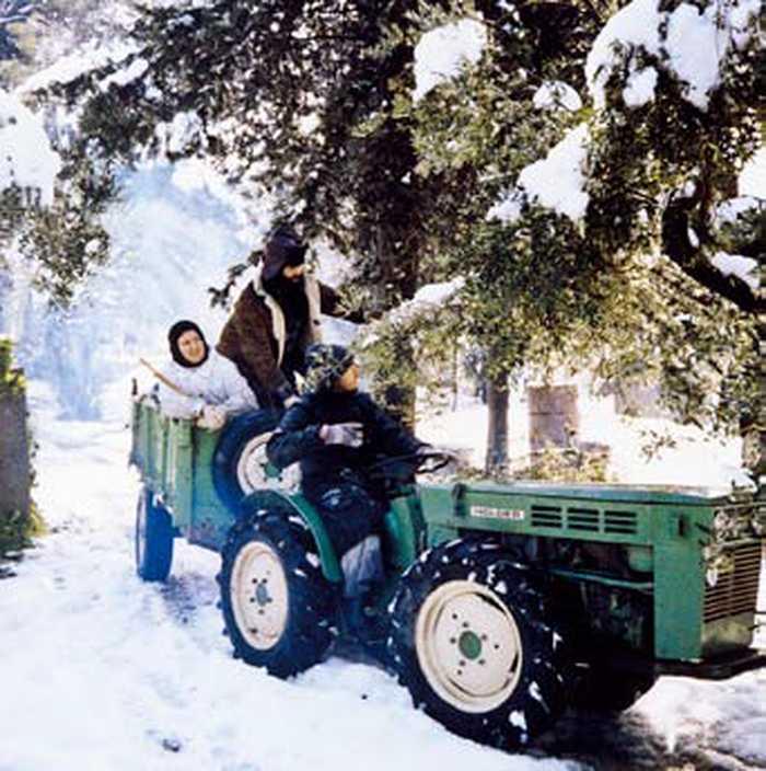 Оливы под снегом